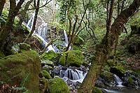 Spring waterfall at Cataract Falls, Mt Tamalpias State Park, California