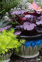 Container gardens pots, Festuca, blue pots, Alyssum Lobularia purple Heuchera Grape Expecations , yellow Sedum Begonia  in flower