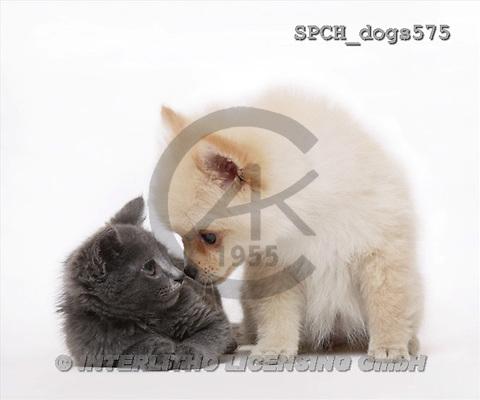 Xavier, ANIMALS, dogs, photos(SPCHdogs575,#A#) Hunde, perros