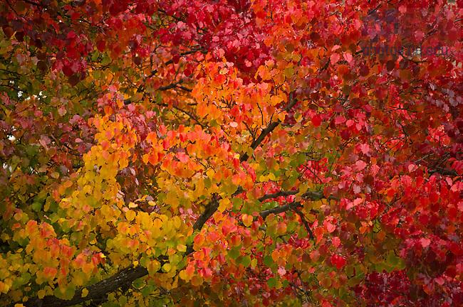 Nov. 11, 2013; Tree in fall color<br /> <br /> Photo by Matt Cashore/University of Notre Dame