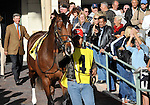31 January 2009: Trainer Michael Matz follows Nicanor into the paddock prior to the colt's first race in a maiden race at Gulfstream Park in Hallandale, Florida.