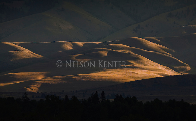 Late evening summer sun skimming over  rolling hills in western Montana