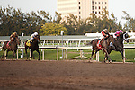 Orb(1) and Violence(3) far ahead of the field as they battle to the wire in the Fountain of Youth (G2) at Gulfstream Park,  Hallandale Beach Florida. 02-23-2013