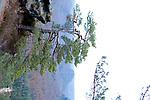 Europa, DEU, Deutschland, Sachsen, Landkreis Saechsische Schweiz-Osterzgebirge, Gemarkung Ostrau, Nationalpark Saechsische Schweiz, Elbsandsteingebirge, Typische Landschaft, Kleiner Winterberg, Gleitmannshorn, Baum, Kiefer, Natur, Umwelt, Landschaft, Jahreszeiten, Stimmungen, Landschaftsfotografie, Landschaften, Landschaftsphoto, Landschaftsphotographie, Wetter, Wetterelemente, Wetterlage, Wetterkunde, Witterung, Witterungsbedingungen, Wettererscheinungen, Meteorologie, Wettervorhersage, <br /> <br /> [Fuer die Nutzung gelten die jeweils gueltigen Allgemeinen Liefer-und Geschaeftsbedingungen. Nutzung nur gegen Verwendungsmeldung und Nachweis. Download der AGB unter http://www.image-box.com oder werden auf Anfrage zugesendet. Freigabe ist vorher erforderlich. Jede Nutzung des Fotos ist honorarpflichtig gemaess derzeit gueltiger MFM Liste - Kontakt, Uwe Schmid-Fotografie, Duisburg, Tel. (+49).2065.677997, ..archiv@image-box.com, www.image-box.com]