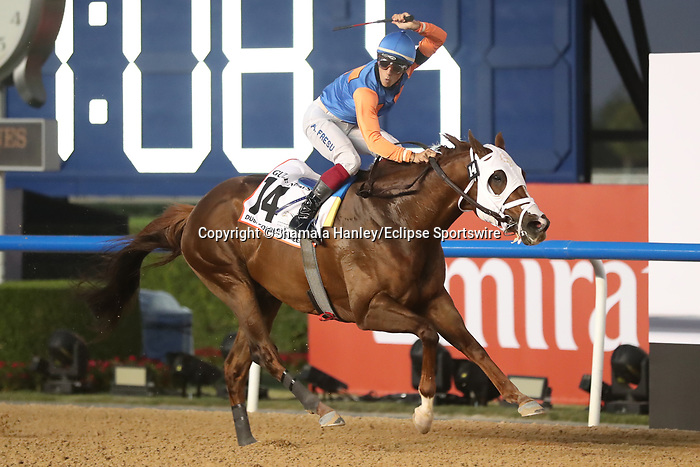 March 27, 2021: ZENDEN #14 ridden by Antonio Fresu wins The Group 1 Golden Shaheen for Carlos David  on Dubai World Cup Day, Meydan Racecourse, Dubai, UAE. Shamela Hanley/Eclipse Sportswire/CSM