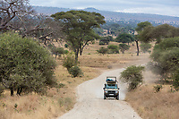 Tanzania. A Road in Tarangire National Park.