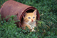 Kitten peeks out of an old paint can.