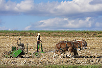 Amish farmer tilling with horse drawn machinery, Lancaster, Pennsylvania, USA
