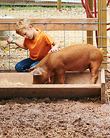 A young boy with a pig as it feeds from a trough