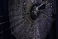 A creation in silk and geometry, by a spider, no less, lit from behind.
