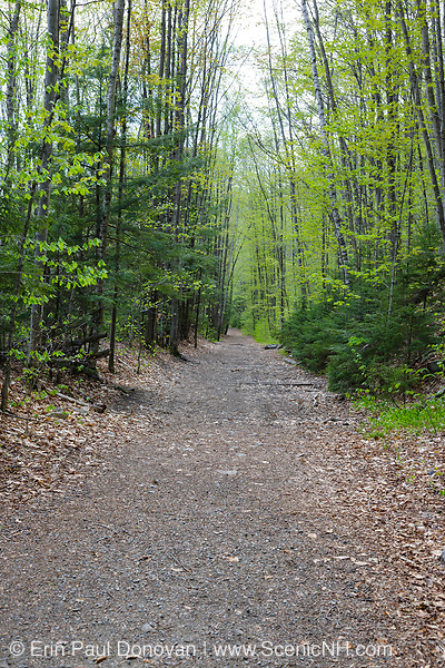 Lincoln Woods Trail in Lincoln, New Hampshire during the spring months. This trail utilizes the old railroad bed of the East Branch & Lincoln Logging Railroad (1893-1948). And railroad ties are still visible along the trail.
