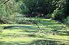 Naturschutzgebiet Alte Sandlache, Altrheinarm mit Weichholzauen- und Hartholzauenwald, mit einem hier beheimateten Weißstorch