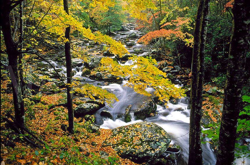 Scenic view looking down over a mountain stream cascading through dark rocks and boulders as it passes tree-lined banks covered with falling autumn leaves. Tennessee, Cades Cove.