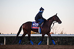 November 4, 2020: Mucho Unusual, trained by trainer Tim Yakteen, exercises in preparation for the Breeders' Cup Filly & Mare Turf at Keeneland Racetrack in Lexington, Kentucky on November 4, 2020. Gabriella Audi/Eclipse Sportswire/Breeder's Cup/CSM