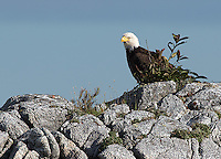 We saw numerous bald eagles throughout the trip.