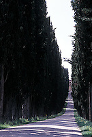 Tree lined road<br />