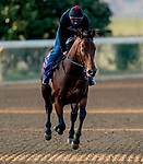November 1, 2020: Four Wheel Drive, trained by trainer Wesley A. Ward, exercises in preparation for the Breeders' Cup Turf Sprint at Keeneland Racetrack in Lexington, Kentucky on November 1, 2020. Scott Serio/Eclipse Sportswire/Breeders Cup /CSM