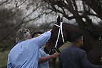 HOT SPRINGS, AR - February 18: Terra Promessa #2 receives a pat from trainer Steve Asmussen after winning the Bayakoa Stakes at Oaklawn Park on February 18, 2017 in Hot Springs, AR. (Photo by Ciara Bowen/Eclipse Sportswire/Getty Images)