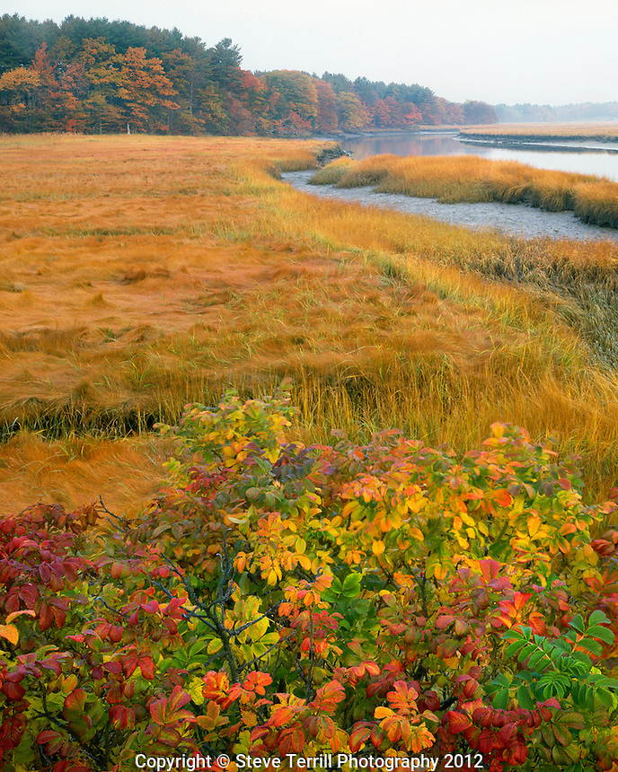 Tidal marsh on the Mousam River near Kennebunkport Maine