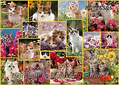 COLLAGEN, photos+++++,KL16506,#collagen#,cats, EVERYDAY ,collages,puzzles