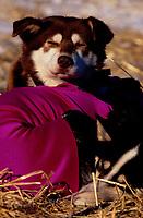 Garth Elsdon's Dog Sleeps at Takotna