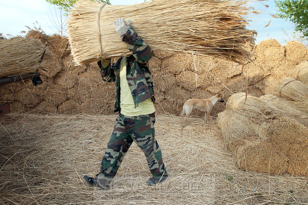 A man carries reeds, harvested from the Zhalong Wetlands, Heilongjiang Province. China. 2011