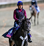November 1, 2018: My Gal Betty, trained by Roger L. Attfield, exercises in preparation for the Breeders' Cup Juvenile Fillies Turf at Churchill Downs on November 1, 2018 in Louisville, Kentucky. Michael McInally/Eclipse Sportswire/CSM