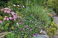mixed garden border with Rose 'Cornelia', Geranium sanguineum; Digging Dog Nursery