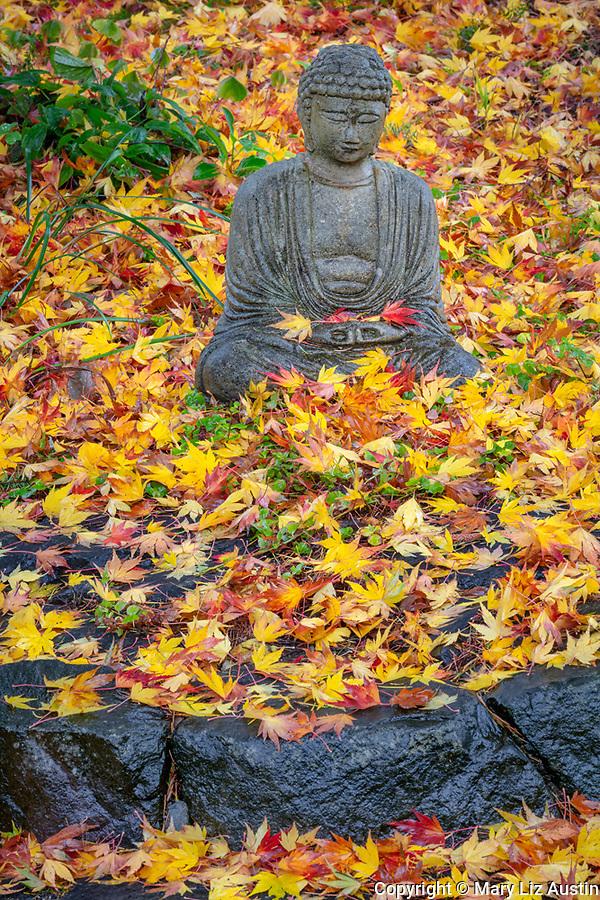 Vashon-Maury Island, WA: Meditating buddha statue in a sea of colorful autumn maple leaves