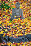 Vashon-Maury Island, WA: Meditating buddha statue in a sea of colorful autumn maple leaves