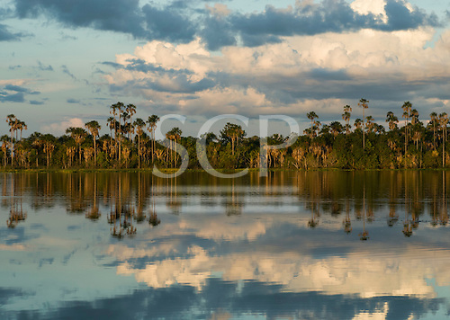 Xingu Indigenous Park, Mato Grosso State, Brazil. Aldeia Kuikuro - central village. The lake  with buriti palms at sunset. Ideal for fishing and bathing.