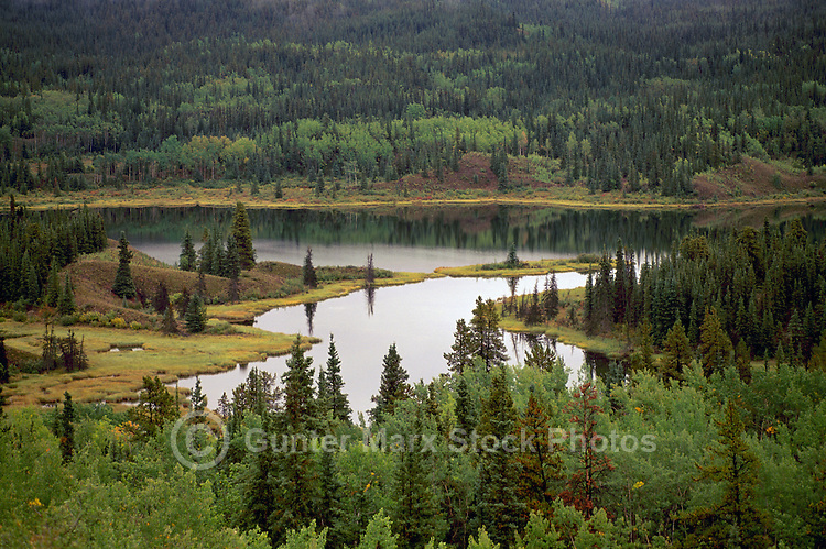 Mixed Boreal Forest along Alaska Highway near Lower Post, Northern BC, British Columbia, Canada, Summer