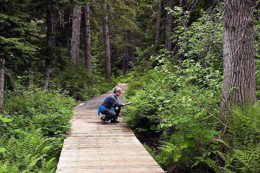 Hiking trail, Winner Creek, Chugach National Forest, Alaska, USA