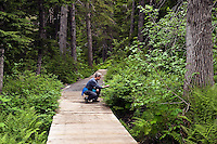 Hiking trail, Winner Creek, Chugach National Forest, Alaska, USA