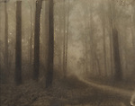 Foggy Forest Path<br /> Cyanotype + Coffee toning
