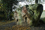 Medway Megaliths. Upper White Horse Stone. Blue Bell Hill Near Aylesford Kent Uk