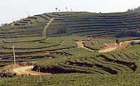 "The Tian Hu (Sky Lake) Tea Farm in the mountains outside Fuding City, Fujian Province where ""Silver Tip"" tea is produced.  Workers here are paid around 53 pounds a month during harvest season, they work ten hour days, seven days a week and the women work with the children strapped to their backs. The tea sells for upto 20 pounds a pot in the UK."