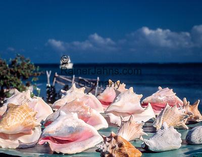 Jamaika: Muscheln, Souvenirs | Jamaica: shell, souvenirs