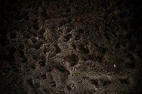 VILLAVICENCIO - COLOMBIA. 13-10-2018: Huellas de ganado son vistas durante el 22 encuentro Mundial de Coleo en Villavicencio, Colombia realizado entre el 11 y el 15 de octubre de 2018. / Cow footprints are senn during the 22 version of the World  Meeting of Coleo that takes place in Villavicencio, Colombia between 11 to 15 of October, 2018. Photo: VizzorImage / Gabriel Aponte / Staff