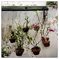 Plants hanging in a garden in Jakarta.