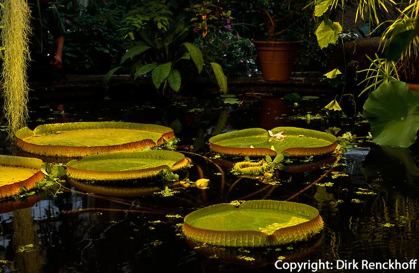 Norwegen, Oslo, Botanischer Garten Botanisk hage