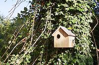 Nistkasten für Eichhörnchen, Eichhörnchen-Haus, Eichhörnchenhaus, Eichkätzchen, Eichkater, Sciurus vulgaris, Nesting box for squirrels, squirrel house