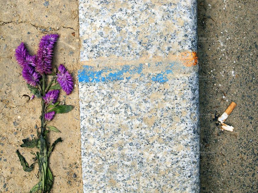 France. Ile-de-France. Paris. Purple flowers and discarded cigarette butt on the sidewalk. 10.07.2011 © 2011 Didier Ruef