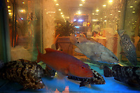CHINA. Hong Kong. A fish tank in the window of a restaurant in Kowloon. Officially the Hong Kong Special Administrative Region, it is a territory located on China's south coast on the Pearl River Delta. It has a population of 6.9 million people, and is one of the most densely populated areas in the world. 2008