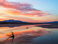 Water can almost always be found in Death Valley. Here, the sunset makes for a nice reflection in one of these slow moving rivers surrounding some long dead bush which apparently did not find water soon enough....