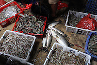 Seafood caught in the bay off of Jakarta. As a result of severe levels of water pollution in the bay, seafood has now laced with toxins. The bay's toxicity has led to many fisherman being unable to sell seafood, resulting in large amounts of unemployment and continued health concerns.