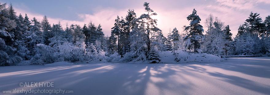 Sunrise over frozen lochan. Inverness-shire. Scotland, November.