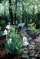 Iris with garden path and white bench, trees in background #5327. Virginia.