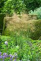 Stipa gigantea, Great Dixter, early June