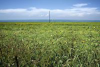 A telegraph pole near to Qinghai Lake on the Qinghai-Tibetan Plateau. Qinghai Province. China. 2010